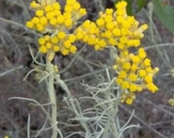Helichrysum butter