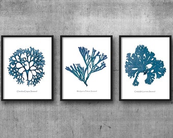 Coral Prints, Coral Print, Sea Coral Set Of 3, Nautical Wall Art, Seaweed Prints, Marine Art, Coral Art, Coral and Seaweed, Denim Blue, Navy
