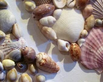 Seashell Fins