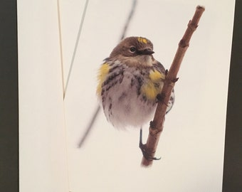 Yellow-Rumped Warbler Card