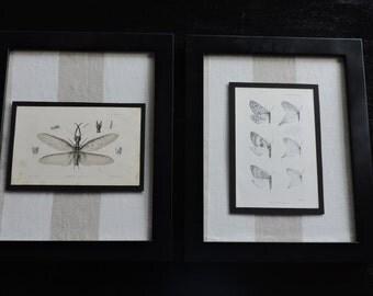 1840 framed prints