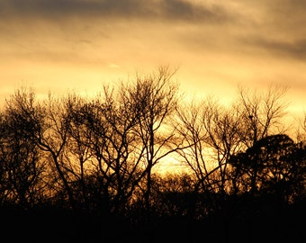 Delaware Beauty Collection-Sunset Over Trees