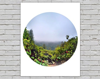 Boulder Creek Santa Cruz Mountains Fog Photograph California Poster 8x8 8x10 12x12 12x16 16x16 16x20