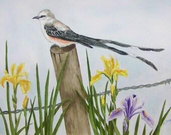 Scissortail Flycatcher and Iris Realistic watercolor bird painting