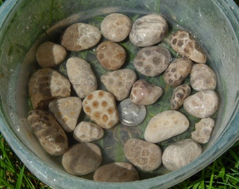 25 Unpolished Petoskey Stones