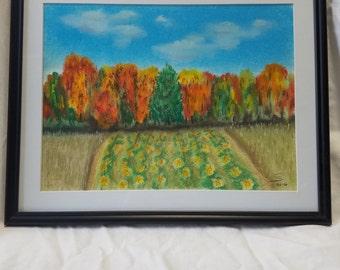 Pumpkin Patch Berkshires