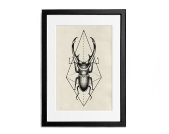 Insect Print illustration A4 Poster Wall Decor Naturalistic Illustration Active