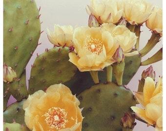 Flower Photograph - Cactus Bloom - Fine Art Photograph - Yellow - Bloom - Floral - Botanical - Flower Art - Pink - Oversized Art - Bock