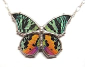 Real Butterfly Jewelry- Madagascan Sunset Moth Necklace - Colorful and Fun Entomology Necklace - Perfect Present for Her