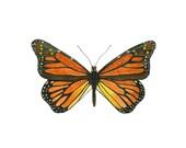 Entomology Monarch Butterfly Art,  Insect Art, Bug Art,  Children's Room Art Decor, Girls Room Art, Butterfly Watercolor Print