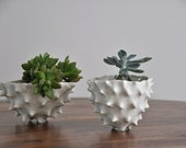 Tall Conch Bowl - White Modern Ceramic Bowl Modern Planter Ceramic Pot