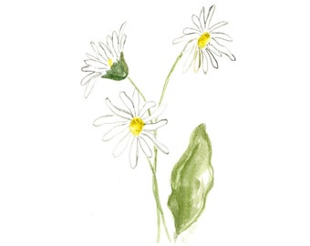 Daisy Flower Note Cards Stationery Watercolor Handmade Botanical Art