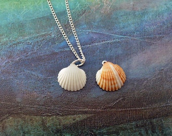 Natural Seashell Tiny Necklace - Pendant necklace - White Seashell - Beach Jewelry - Summer Jewelry - Everyday - Gift idea