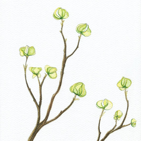 Dogwood Branches Watercolor / fine art archival print