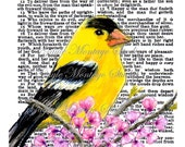 8 x 10 Art Print Watercolor on Bible Page  Spring bloom blossoms  & AMERICAN GOLDFINCH Wisdom  Promises Godliness Happy Gain Of Wisdom