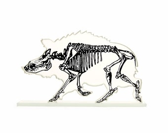 Xray Wild Boar Skeleton Print Glass Sculpture Custom Colours