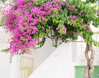 Greece travel photography - white pink green wall art - bougainvillea flowers - whitewashed street - Greek Islands - Greece Flowers Six