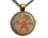 Sea Star Star Fish Glass Dome Pendant or with Chain Link Necklace  NL105