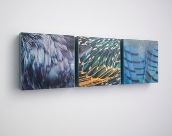 Trio of Gorgeous Bird Feather Panels - Ready to Hang Wooden Plaques -  Fine Art Image Collection on  5-inch Square, Birch Panel