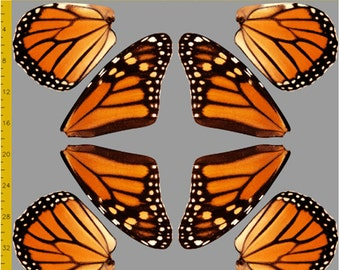Orange Monarch Butterfly Fabric to Make Costume Wings - 100% Cotton Woven