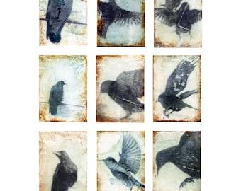 In Flight - set of 9 prints