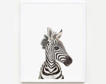 Animal Nursery Art Print. Baby Zebra Little Darling. Safari Animal Wall Art. Animal Nursery Decor. Baby Animal Photo.