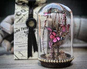 Butterflies Miniature GLASS Dome Natural History Cabinet Home Decor