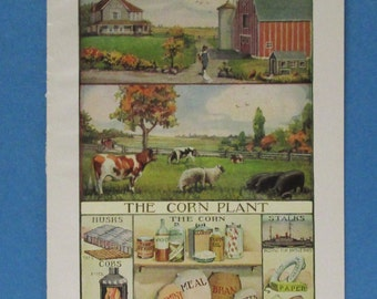 Farm Print Corn Barnyard Grain Plant Products Diagram, 20s Country Barn Animals Book Plate Vintage Agriculture Wall Hanging Cow Pig Sheep