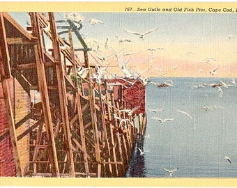 Vintage Cape Cod Postcard - Seagulls by an Old Fishing Pier (Unused)