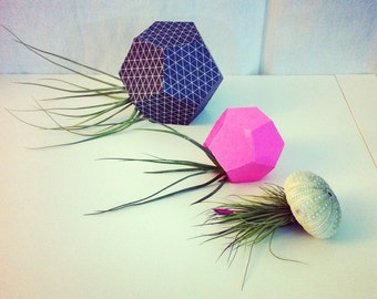 Terrarium 3d papercraft. You get a PDF digital file templates and instructions for this DIY modern cute terrariums. Great for air plants!