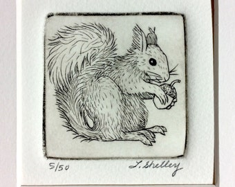 Squirrel Etching by Artist - Lora Shelley