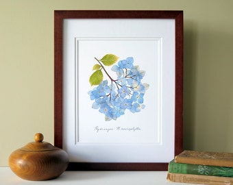 Pressed flower print, 11x14 double matted, Blue Hydrangea flowers, wall decor no. 0012