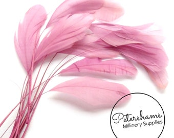 Pack of 12 Loose Stripped Coque Feather for Millinery & Fascinators - Dusky Pink
