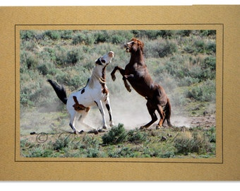 Shaman and Commander Fighting - Wild Stallions Photo Cards - Wild Horse Cards - Cards Horses - Steen Mountains Wild Horses of Oregon