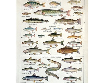 1900 antique FISH lithograph print original antique animal lithograph of POISSONS - freshwater fishes