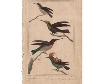 1831 HUMMINGBIRDS - ANTIQUE ENGRAVING - original antique print - ornithology avian birds - antique bird print -