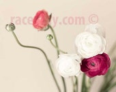 Flowers Bedroom Decor White Coral Pink Wall Art- Ranunculus Print, Pastel, Baby Girl Nursery Decor, Flower Photography