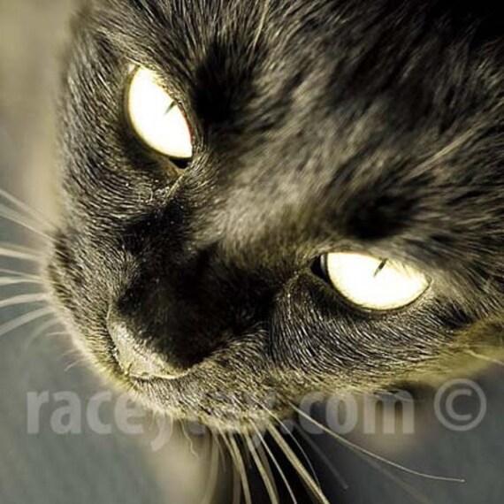 Black Cat Art- Black & Gold Cat Print, Large Wall Art, Black Cat, Cat Art, Cat Photo, Cat Wall Art