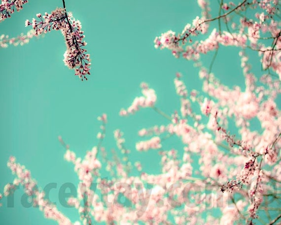 Pastel Wall Art, Blue, Pink, Flower Photography, Girl Nursery Decor, Spring, Blossom Print, Bedroom Wall Art