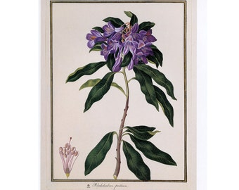 Vintage Rhododendron Print Book Plate Sale Buy 3, get 1 Free