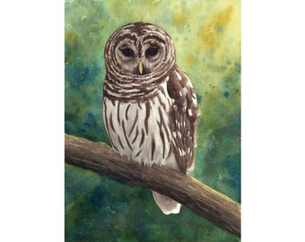 Barred Owl Watercolor Painting - Fine Art Archival Print- Signed Giclée- Limited Edition Bird Art by Laura D. Poss