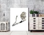 Vogel-Kontur in Beige, Sperling Collage, Fotografie, 11 x 14 Kunst print, Taupe, grau, natürliche Wohnkultur, Wildtiere, Naturgeschichte