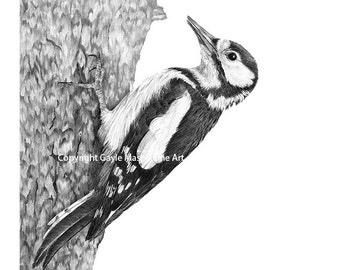 Woodpecker - Limited Edition Giclee Print from an Original Drawing