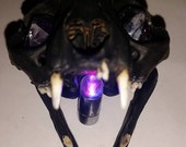 Genuine Black Cat Skull With Amethyst Crystal Point Eyes and LED Light.