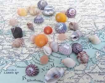 Irish Sea Shells Seashells Assorted Beach Shells from Ireland Shells Craft Shells Shells for Crafts or Jewellery Jewelry Making