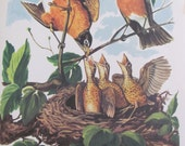 "Original Vintage School Classroom Poster Print - Circa 1964 - Robins - 9"" x 12"""