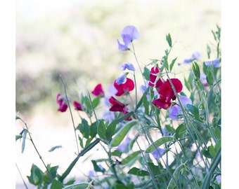 "Nature Photography, Flower Photo, Fine Art Photography, Floral Photography, Spring, Summer Wall Art, Print, Cottage Decor - ""Desert Flowers"""