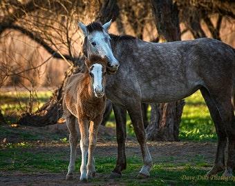 Wild Horses Salt River Arizona mother and colt fine art photograph