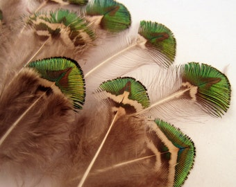 Peacock Feathers Gold Body 10 craft feathers natural feathers