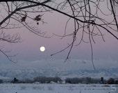 Digital Download Photo Lavender Evening